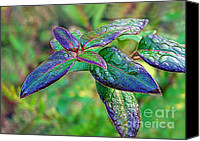 Judi Bagwell Canvas Prints - Raindrops on the Leaves Canvas Print by Judi Bagwell