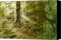 Rainforest Canvas Prints - Rainforest Canvas Print by Les Cunliffe