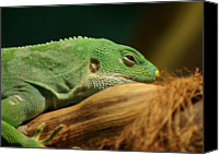 Lizard Canvas Prints - Rainforest Lizard Canvas Print by Brian T. Nelson
