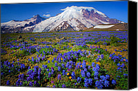 Lupines Canvas Prints - Rainier Lupines Canvas Print by Inge Johnsson
