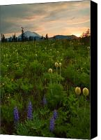 Lupine Canvas Prints - Rainier Wildflower Light Canvas Print by Mike  Dawson