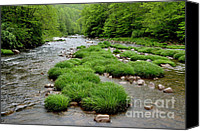Williams Canvas Prints - Rainy Day on Williams River  Canvas Print by Thomas R Fletcher
