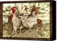 Roost Canvas Prints - Raising Chickens Canvas Print by Kathy Jennings