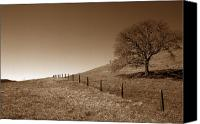 Fences Canvas Prints - Ranch Road Oak Canvas Print by Kathy Yates