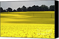 Rural Scenes Photo Canvas Prints - Rape Field in East Germany Canvas Print by Heiko Koehrer-Wagner