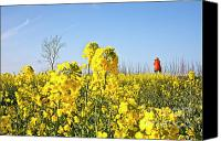 Inspirational Photograph Canvas Prints - Rape field with photographer Canvas Print by Heiko Koehrer-Wagner