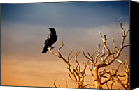 Bare Tree Canvas Prints - Raven On Sunlit Tree Branches, Grand Canyon Canvas Print by Trina Dopp Photography