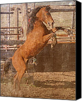 Wild Horse Pyrography Canvas Prints - Rearing Horse Canvas Print by Fred Haskell