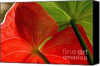 Ranjini Kandasamy Canvas Prints - Red and Green Anthurium Canvas Print by Ranjini Kandasamy