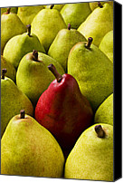 Foodstuff Canvas Prints - Red and green pears  Canvas Print by Garry Gay