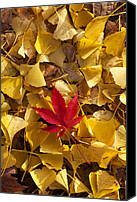 Leaf Pile Photo Canvas Prints - Red Autumn Leaf Canvas Print by Garry Gay