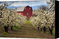 Trees Canvas Prints - Red Barn Spring Canvas Print by Mike  Dawson
