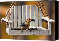 Bird On Feeder Canvas Prints - Red Bellied on Swing - 5 Canvas Print by Bill Tiepelman