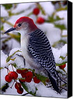 Woodpecker Canvas Prints - Red Bellied Woodpecker Canvas Print by Ron Jones
