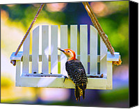 Bird On Feeder Canvas Prints - Red-Belly Comes For Lunch Canvas Print by Bill Tiepelman