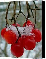 Berry Canvas Prints - Red Berries in Winter Canvas Print by Juergen Roth