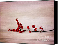 Red Berries Canvas Prints - Red berries Canvas Print by Kristin Kreet