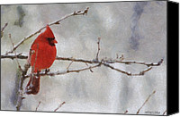 Snowy Canvas Prints - Red Bird of Winter Canvas Print by Jeff Kolker