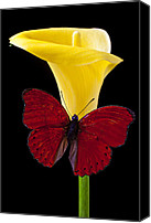 Horticulture Canvas Prints - Red Butterfly and Calla Lily Canvas Print by Garry Gay