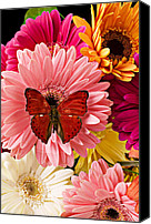 Still-life Canvas Prints - Red butterfly on bunch of flowers Canvas Print by Garry Gay