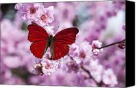 Still Life Tapestries Textiles Canvas Prints - Red butterfly on plum  blossom branch Canvas Print by Garry Gay