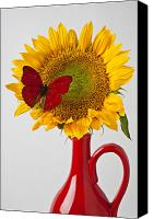 Insects Photo Canvas Prints - Red butterfly on sunflower on red pitcher Canvas Print by Garry Gay