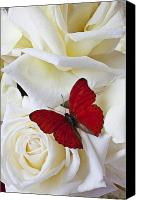 Still Life Tapestries Textiles Canvas Prints - Red butterfly on white roses Canvas Print by Garry Gay