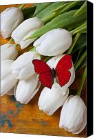 Still-life Canvas Prints - Red butterfly on white tulips Canvas Print by Garry Gay