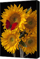 Yellows Canvas Prints - Red butterfly with four sunflowers Canvas Print by Garry Gay