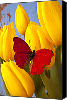 Yellows Canvas Prints - Red butterful on yellow tulips Canvas Print by Garry Gay