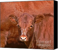 Calf Canvas Prints - Red Calf Canvas Print by Jennie Marie Schell
