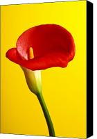 Verticle Canvas Prints - Red calla lilly  Canvas Print by Garry Gay
