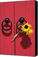Door Handles Canvas Prints - Red door sunflowers Canvas Print by Garry Gay