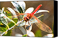 Meadowhawk Canvas Prints - Red Dragon Canvas Print by Mitch Shindelbower