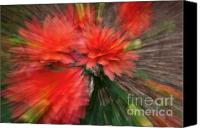 Red Flowers Canvas Prints - Red explosion Canvas Print by Heiko Koehrer-Wagner