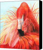 Pink Flamingo Drawings Canvas Prints - Red Flamingo Canvas Print by Carla Kurt