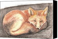 Fox Pastels Canvas Prints - Red Fox Sunning Canvas Print by Russ  Smith