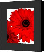 Canvas Wrap Canvas Prints - Red Gerber Border     Digital Art  Canvas Print by Marsha Heiken