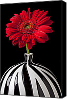 Chrysanthemums  Canvas Prints - Red Gerbera Daisy Canvas Print by Garry Gay
