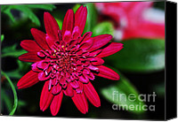 Red And Green Canvas Prints - Red Gerbera Daisy Canvas Print by Kaye Menner