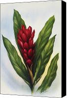 Archival Canvas Prints - Red Ginger Canvas Print by Hawaiian Legacy Archive - Printscapes