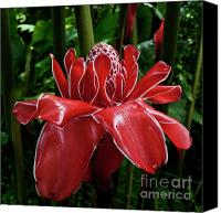 Torch Canvas Prints - Red Ginger Lily Canvas Print by Heiko Koehrer-Wagner