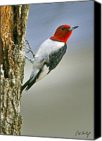 Woodpecker Canvas Prints - Red-Headed Woodpecker Canvas Print by Phill  Doherty