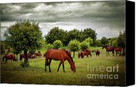 Feed Canvas Prints - Red Horses Canvas Print by Carlos Caetano