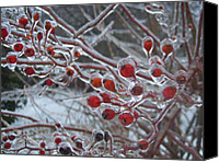 Natural Storm Canvas Prints - Red Ice Berries Canvas Print by Kristine Nora