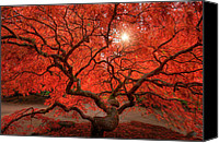 Gnarly Canvas Prints - Red Lace Canvas Print by Dan Mihai