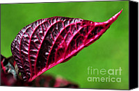 Red And Green Canvas Prints - Red Leaf Canvas Print by Kaye Menner