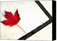 View Askew Canvas Prints - Red Leaf On Sidewalk Canvas Print by Katherine Adams