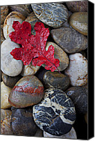 Natural Canvas Prints - Red Leaf Wet Stones Canvas Print by Garry Gay