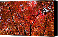 Gatlinburg Canvas Prints - Red Leaves Black Branches Canvas Print by Rich Franco